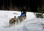 Dog sledding near Moscow. Moscu, RUSSIA