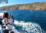 Observação de Golfinhos. Distrito de Set�bal, PORTUGAL