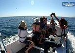 Excursão de barco pelo litoral de Arrábida e observação de golfinhos. Distrito de Set�bal, PORTUGAL