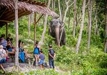 A Morning with the Elephants at Phuket Elephant Sanctuary (PES). Phuket, Thailand