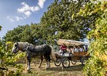 Coach, horse and pic-nic through the vineyard in Umbria, Perugia, ITALY