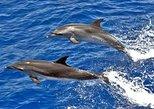 Avistamiento de Cetaceos. Gran Canaria, ESPAÑA