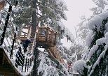 Caminata por los árboles en Whistler. Whistler, CANADA