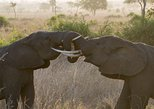 5 Days Explore Selous Game Reserve, Dar es Salaam, TANZANIA