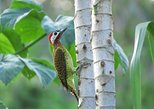 Day hike, introductory walk into the amazon rainforest and brasil nut camp, Puerto Maldonado, PERU