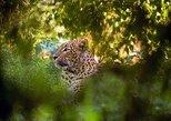 Wilpattu National Park Full Day Safari From Negombo (All Inclusive). Negombo, Sri Lanka