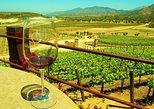 Vive la ruta del Vino, degusta Vinos galardonados MUNDIALMENTE y su gastronomia!. Ensenada, MEXICO