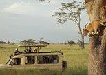 Safari Excelente y Safari lujos Tanzania. Arusha, TANZANIA