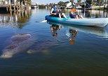 Wildlife Refuge Manatee/Dolphin & Mangrove Kayak Tour with Cocoa Kayaking!. Cocoa Beach, FL, UNITED STATES