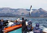 Monarch Wildlife Cruise. Dunedin y la peninsula de Otago, New Zealand