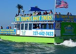 Clearwater Bay, Gulf Coast Dolphin Watching Cruise. Clearwater, FL, UNITED STATES