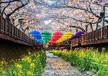 From Busan : Private cherry blossom tour during Jinhae Naval port festival. Busan, South Korea