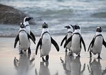 Cape of Good Hope and Penguins Small Group Sightseeing Tour from Cape Town,