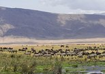 Ngorongoro Crater Day Trip. Arusha, Tanzania