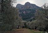 Olive Oil Culture + Tasting. La Palma, ESPAÑA