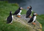Mykines | The Puffin Island, ,