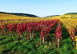 4-Hour Small-Group Beaujolais Wine Tasting Tour from Lyon. Lyon, FRANCE
