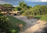 Chobe Full Day Trip In Botswana, Livingstone, ZIMBABUE