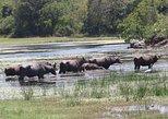 Kumana National Park Shared Safari. Batticaloa, Sri Lanka