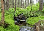 Oslo Hiking - Nordmarka forest tour,