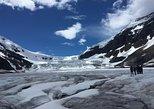 Athabasca Glacier Half-Day Tour,