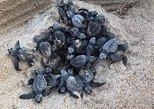 Amazing Turtle Release + Sun set. Huatulco, Mexico