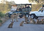 3 Days Guided Kruger Park Safari from Johannesburg. Johannesburgo, South Africa