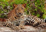 Jeep Safari to Yala National Park With an Expert Of Wild-Life, Parque Nacional Yala, SRI LANKA