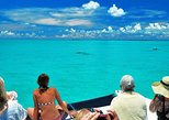 Miami to Key West Day Trip Tour With Glass-Bottom Boat Option,
