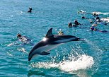 Half-Day Dolphin Eco-Tour from Picton. Picton, New Zealand