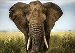01 Night 02 Days Safari in Selous Game Reserve: Departure from Zanzibar, Zanzibar, TANZANIA