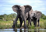 4-Day Kruger National Park Safari from Johannesburg,