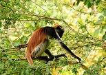 Jozani Forest National Park and Jambiani Village Tour, Zanzibar, TANZANIA