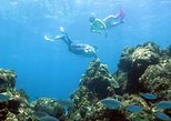 Coral Reef and Turtle Discovery Tour,