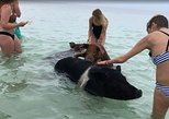 Swim with Pigs on a Tropical Island,