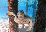 Swimming with sea turtles & Grote Knip Beach - Best cruise excursion. Curazao, BRAZIL