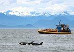 Excursão com observação de baleias saindo de Vancouver. Vancouver, CANADÁ
