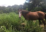 Private Horse Ecounter in Lenakel Tanna Island, Isala de Tanna, VANUATU