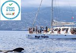 Madeira to Cabo Giro Dolphin and Whale Watching Catamaran Sail. Funchal, PORTUGAL