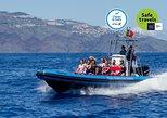 Observação De Golfinhos, Baleias, Tartarugas E Pássaros. Funchal, PORTUGAL