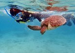 Bahamas Snorkeling with Sea Turtles Private Half-Day Tour,