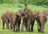 Excursão particular: Safári pelo Parque Nacional Udawalawe. Parque Nacional Yala, Sri Lanka