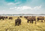 Minneriya National Park Shared Safari. Anuradhapura, Sri Lanka