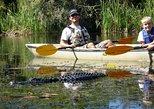 Mangrove Tunnel Kayak Eco Tour, Naples, FL, UNITED STATES