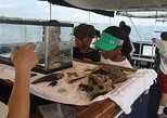 Nature Boat Tour with Certified Naturalist in Charleston, Charleston, SC, UNITED STATES
