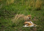 3 Days Group Joining Camping Safari Lake Manyara and Ngorongoro Crater, Arusha, TANZANIA