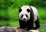 630 USD Per Group 2-Days Chengdu Panda Base+Dazu Rock Carvings Private Tour, Chongqing, CHINA
