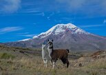 Quito to Cuenca 4 or 5-Day Tour with Cotopaxi, Quilotoa, Baños and Chimborazo,