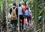 Rainforest Trek in Guyana,