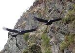 Antisana and Condors Watching Day Trip,